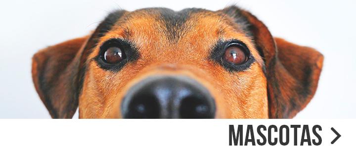Compra los mejores productos para tu mascota en DIA
